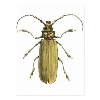 Cartão Postal Besouro, Prionus Corticinus