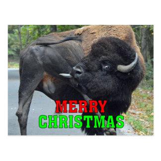 Cartão Postal Bisonte engraçado de Bull do Feliz Natal que lambe