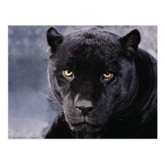 Cartão Postal Black pantera