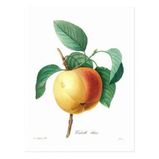 Cartão Postal Blanc de Apple 'Calville