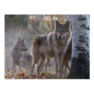 Cartão Postal Bloco de lobo