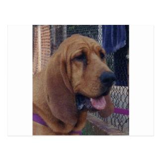 Cartão Postal Bloodhound