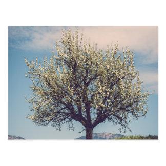 Cartão Postal Blossom on tree a em Switzerland hill
