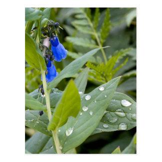 Cartão Postal Bluebells e pingos de chuva