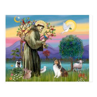 Cartão Postal Bndr-StFrancis-Sheltie-Leah-nocat