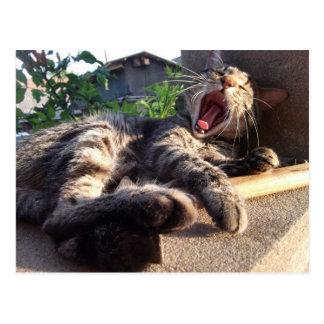 Cartão Postal Bocejos do gatinho