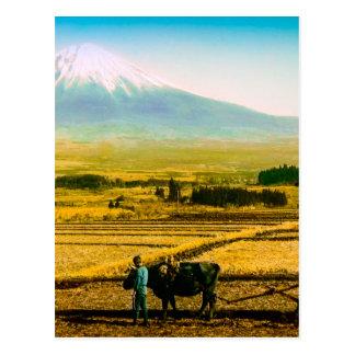 Cartão Postal Bois dos fazendeiros que aram o campo na sombra de