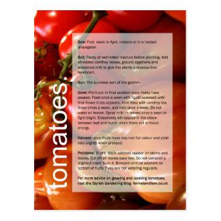 Cartão Postal Bom guia crescente: Tomates & alho