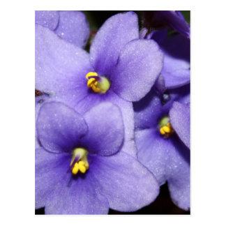 Cartão Postal Boquet violeta