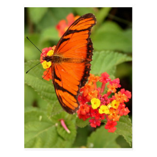 Cartão Postal borboleta alaranjada