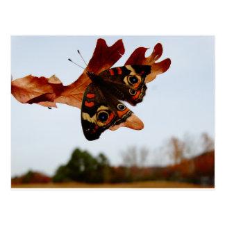 Cartão Postal borboleta alaranjada com pontos azuis