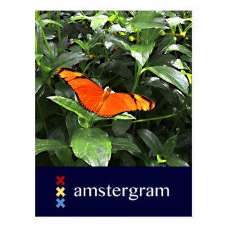 Cartão Postal Borboleta Amstergram