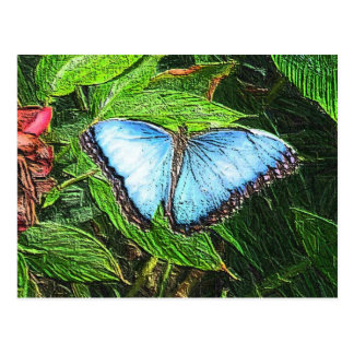 Cartão Postal Borboleta azul