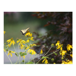 Cartão Postal Borboleta, borboleta