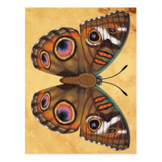 Cartão Postal Borboleta comum do Buckeye