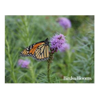 Cartão Postal Borboleta de monarca