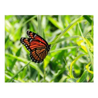 Cartão Postal Borboleta de monarca em vôo