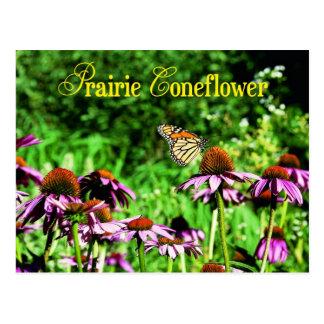Cartão Postal Borboleta de monarca no coneflower roxo da