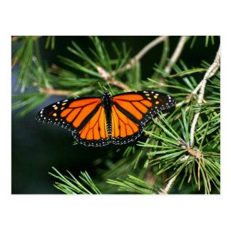 Cartão Postal Borboleta de monarca no pinho
