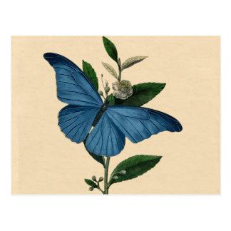 Cartão Postal Borboleta do azul do vintage