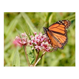 Cartão Postal Borboleta e amigo de monarca