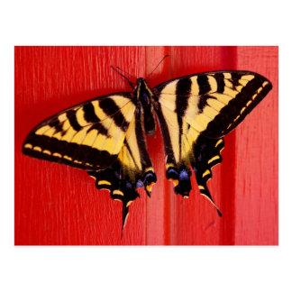 Cartão Postal borboleta incomum do swallowtaill do fundo