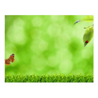 Cartão Postal Borboleta & joaninha sobre a grama