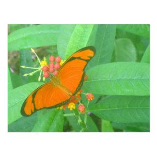 Cartão Postal Borboleta tropical alaranjada de Julia