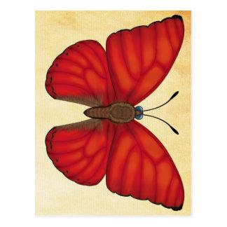 Cartão Postal Borboleta vermelha do planador do sangue