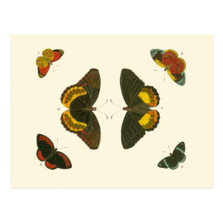 Cartão Postal Borboletas brilhantes por Pieter Cramer