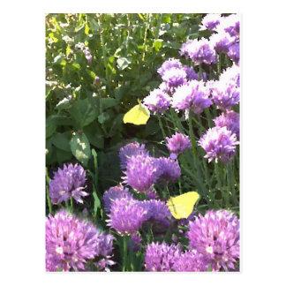 Cartão Postal Borboletas do Brimstone no jardim de erva