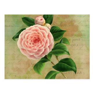 Cartão Postal Botânico francês da camélia do vintage