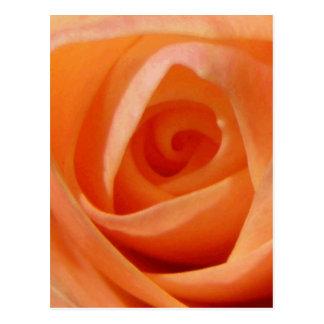 Cartão Postal Botão cor-de-rosa