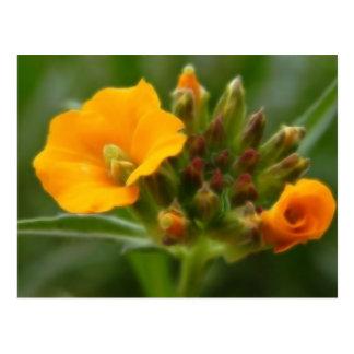 Cartão Postal Botões e flor Siberian do Wallflower