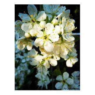 Cartão postal - branco flor