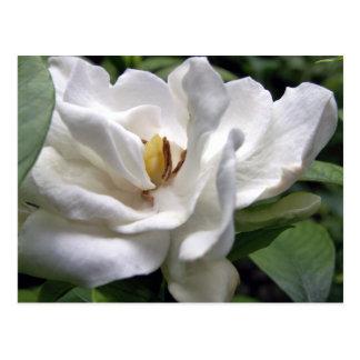 Cartão Postal Branco Petalscape do algodão