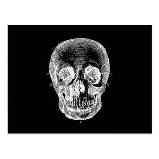 Cartão Postal Branco preto anatômico retro do crânio dos 1800s