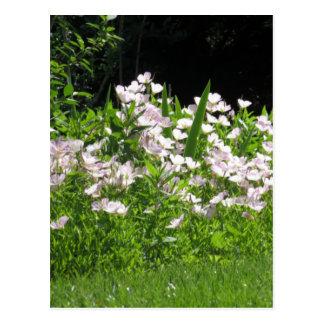 Cartão Postal branco selvagem da flor do primavera do monte NJ
