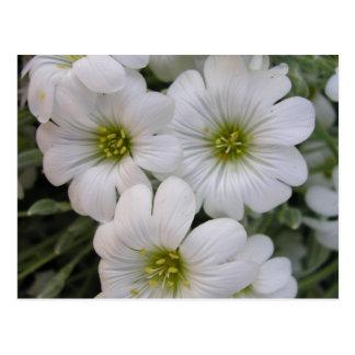 Cartão Postal Branqueamentos de Fleurs