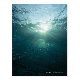 Cartão Postal Brilho claro no recife de corais e na escola dos