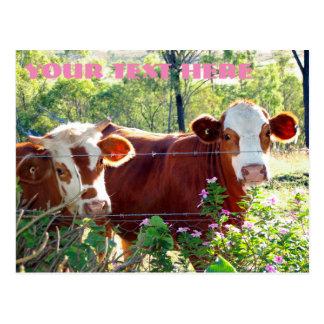 Cartão Postal Brown e animais brancos das bezerras do gado das
