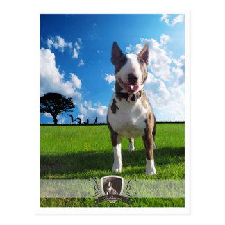 Cartão postal Bullterrier