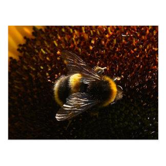 Cartão Postal Bumble a abelha