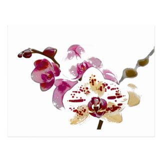 Cartão Postal Buquê da flor da orquídea do Phalaenopsis