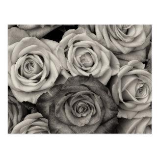 Cartão Postal Buquê preto e branco bonito dos rosas das flores