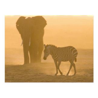 Cartão Postal Burchelli da zebra comum, do Equus, e elefante,