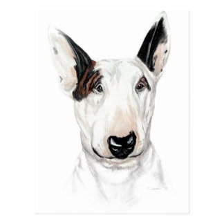 Cartão Postal Busto de bull terrier