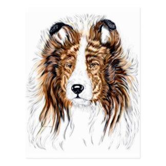 Cartão Postal Busto do Sheepdog de Sheltie Shetland
