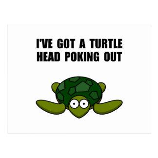 Cartão Postal Cabeça da tartaruga que pica para fora