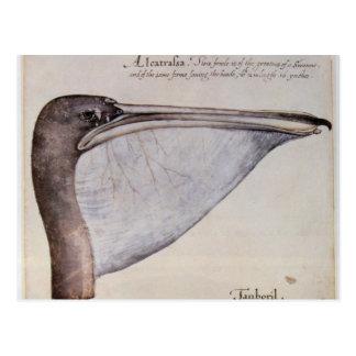 Cartão Postal Cabeça de um pelicano de Brown